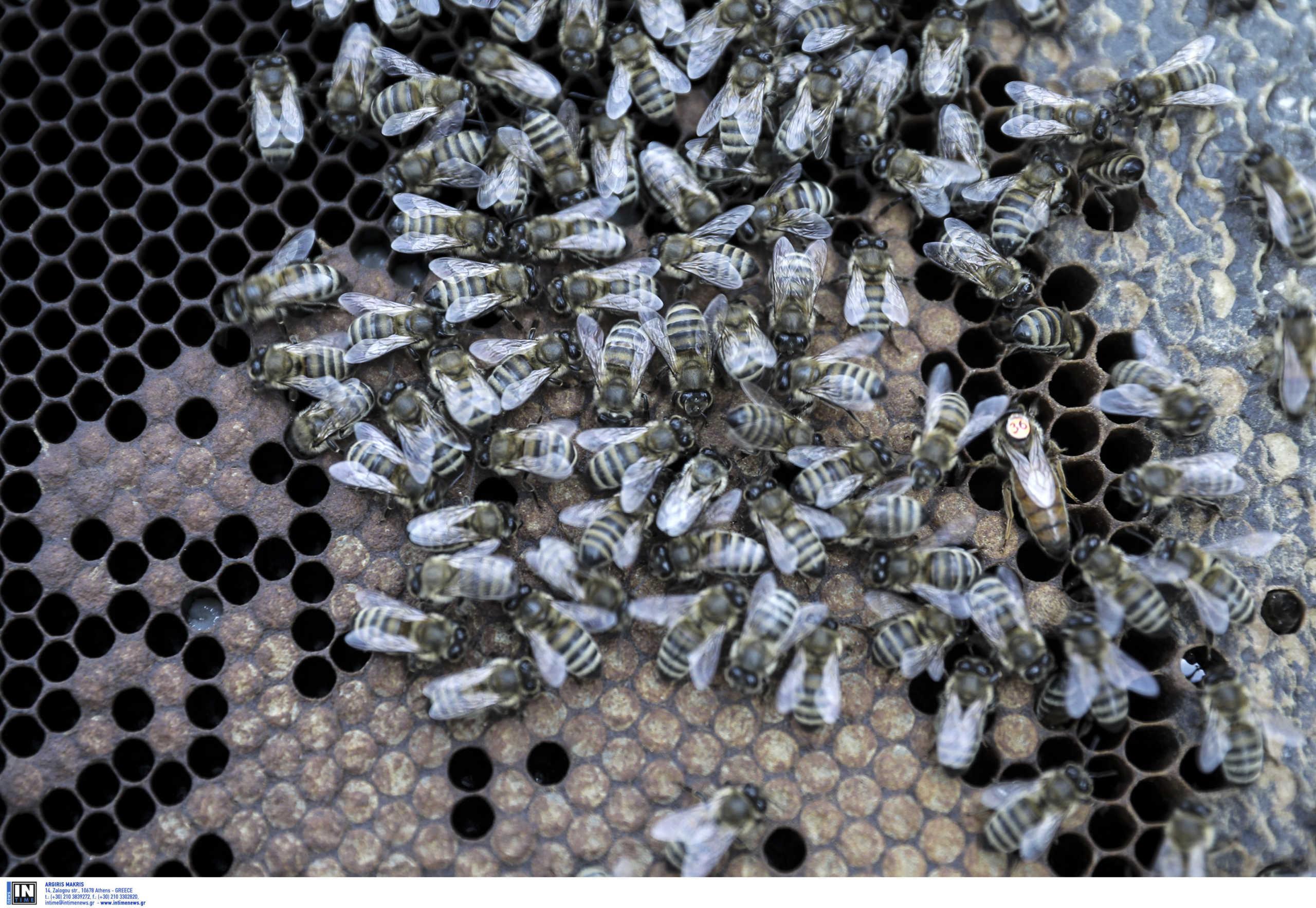 Ηλεία: Ρισκάρει τη ζωή του για να ένα απίστευτο βίντεο! Ο μελισσοκόμος τους άφησε άναυδους (Βίντεο)