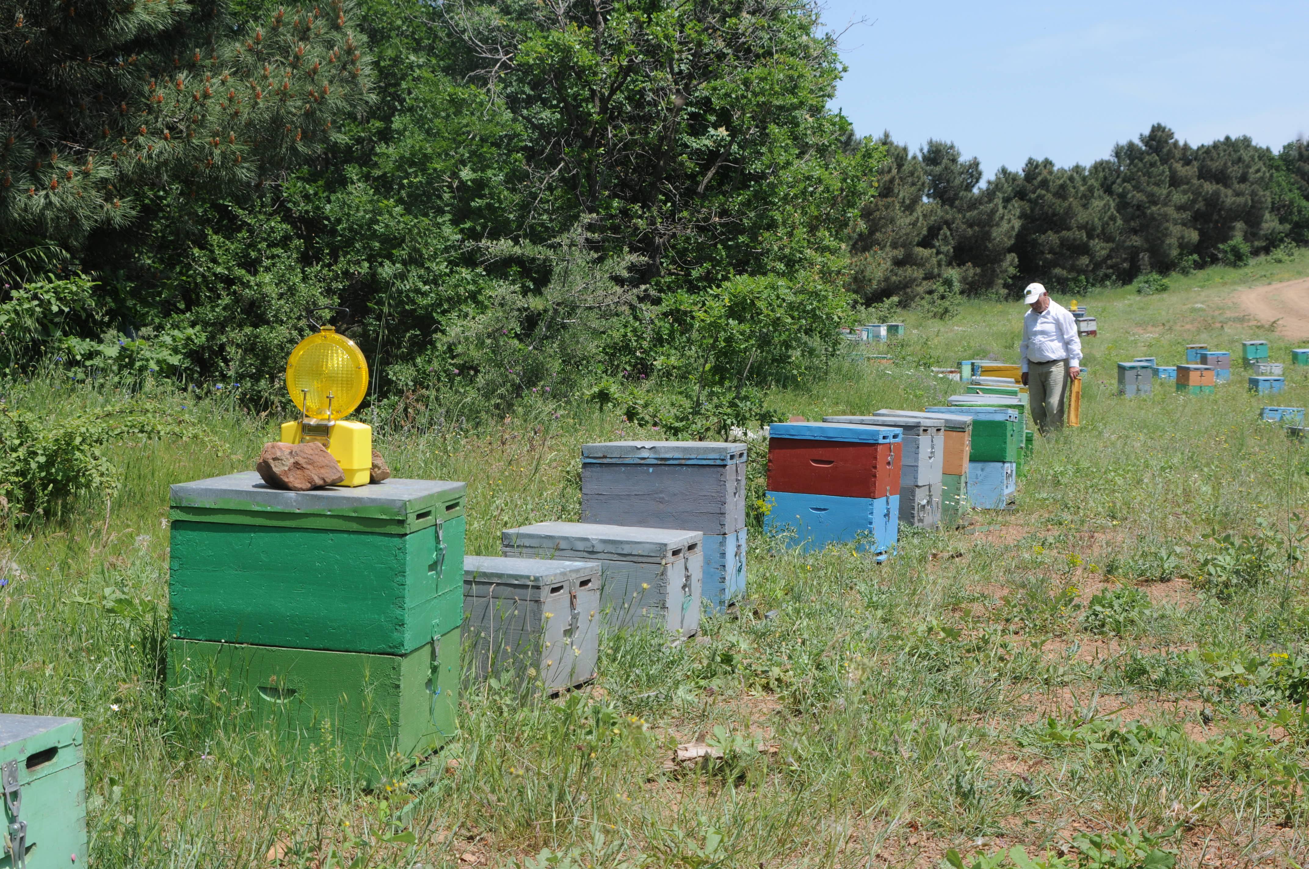 """Η κλιματική αλλαγή """"χτύπησε"""" και την παραγωγικότητα των μελισσών"""