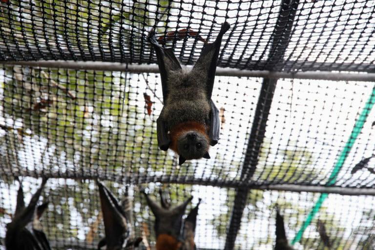 Βρήκαν… «συγγενείς» του κορονοϊού σε κατεψυγμένες νυχτερίδες εκτός Κίνας – Τι μπορεί να σημαίνει