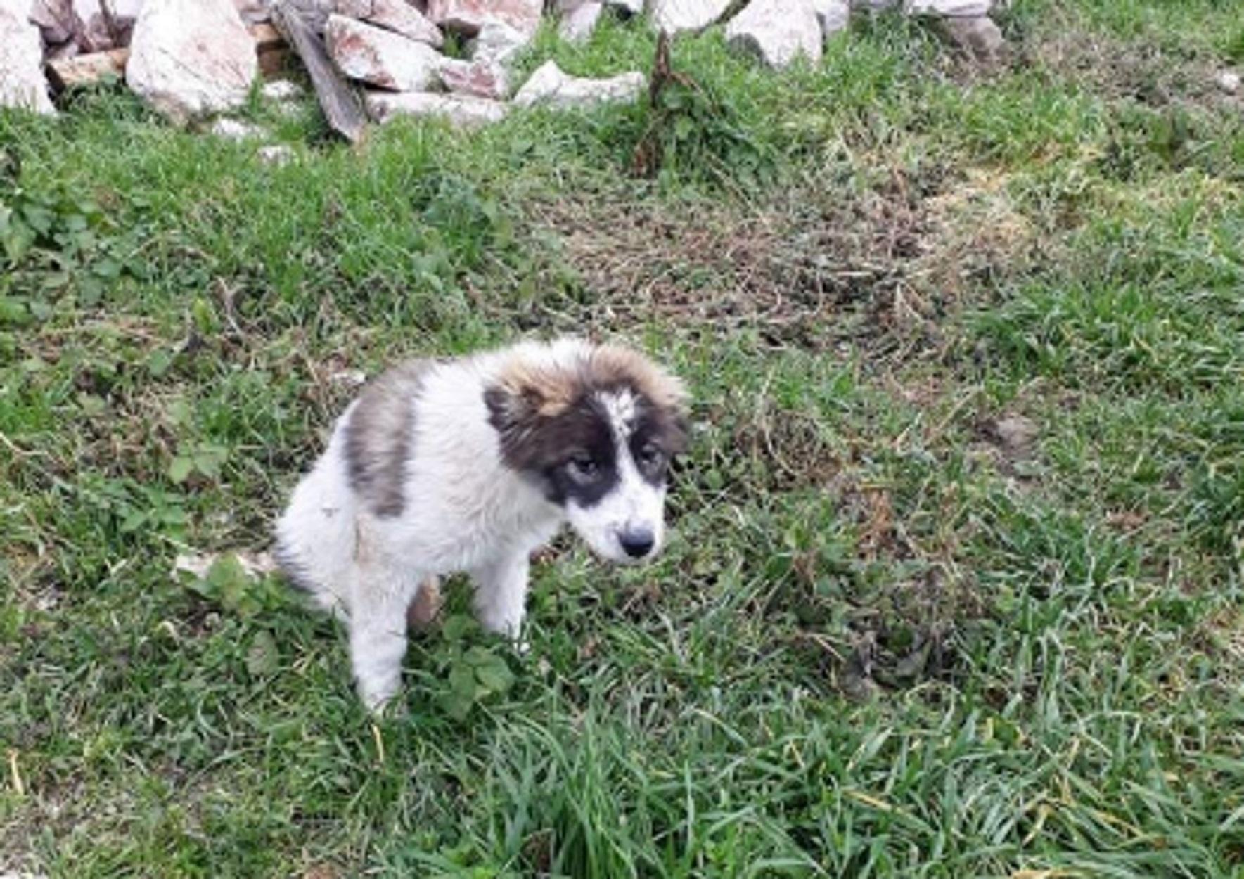 Δομοκός: Απίστευτη βαρβαρότητα με θύμα σκυλάκι