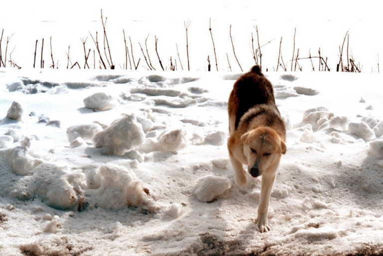 Καιρός – Κρήτη: Το χιόνι έκρυψε το Οροπέδιο του Ομαλού στα Χανιά – Προβλήματα στην ηλεκτροδότηση