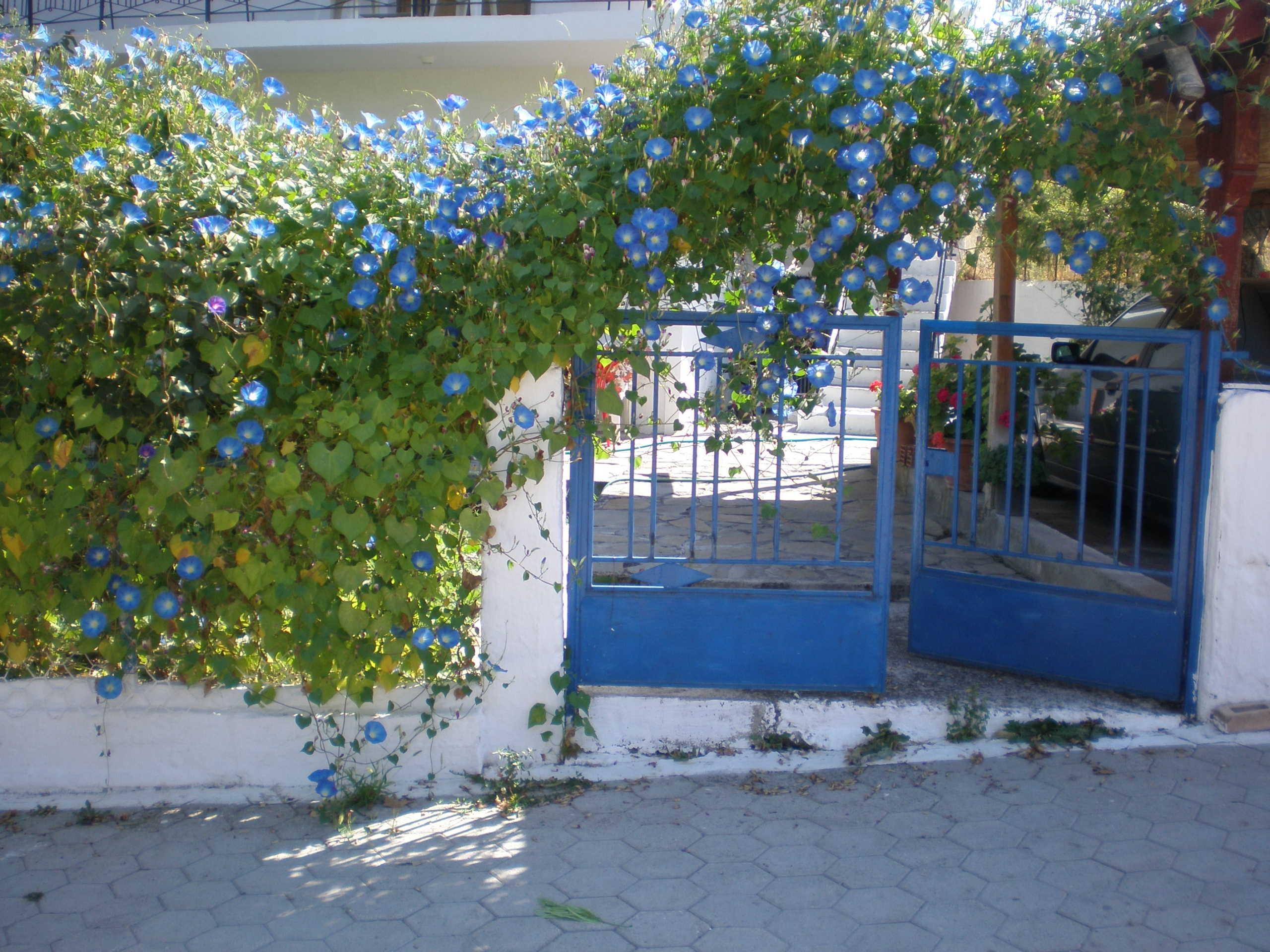 Θεσσαλονίκη: Ανθίζουν τα μπαλκόνια λόγω καραντίνας! Μαραζώνουν οι πασχαλιές στα φυτώρια (Φωτό)