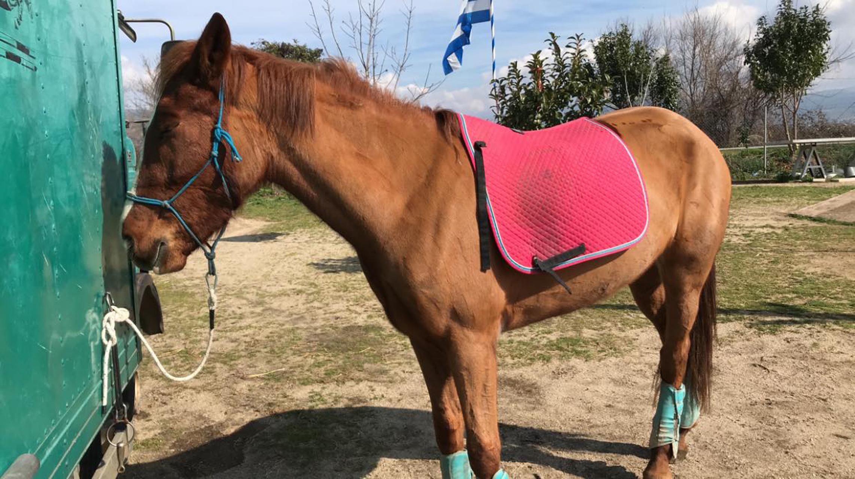 Κτηνωδία στην Καβάλα – Δηλητηρίασαν εννιά άλογα