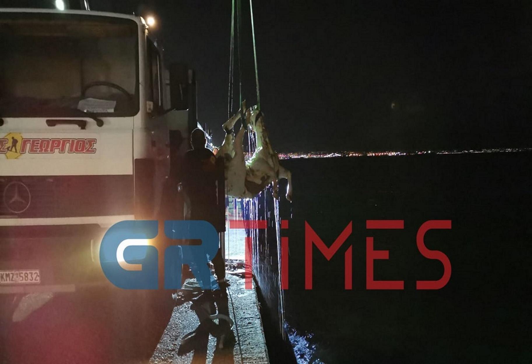 Θεσσαλονίκη: Το νεκρό άλογο ήταν τελικά αγελάδα! (pics, video)