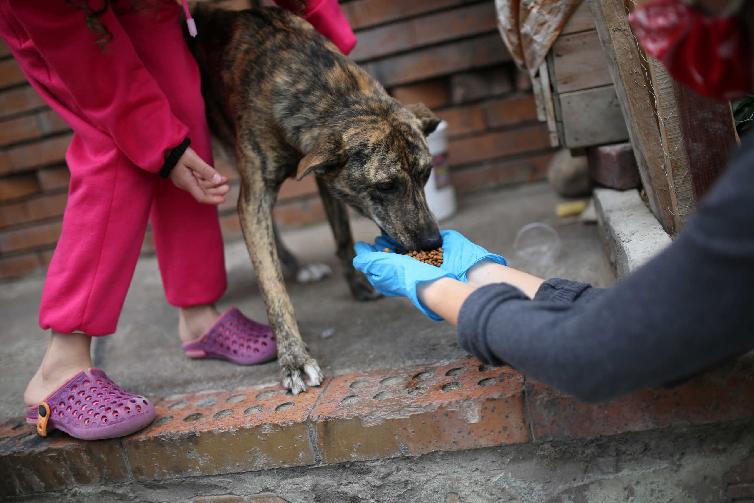 Η νέα θεωρία για το πως ξεκίνησε ο κορονοϊός: Ένας σκύλος έφαγε μια νυχτερίδα