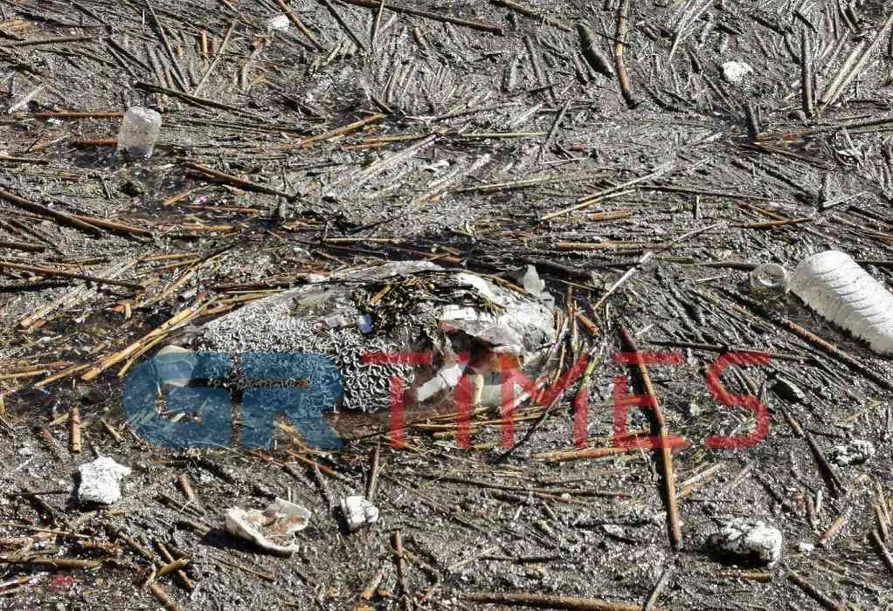 Ένα μεγαλόσωμο ζώο και μία καρέτα καρέτα ξεβράστηκαν νεκρά στον Θερμαϊκό (pics, video)