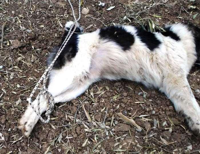 Λιβανάτες: Έδεσε απ' τα πόδια σκυλάκι και το άφησε να πεθάνει