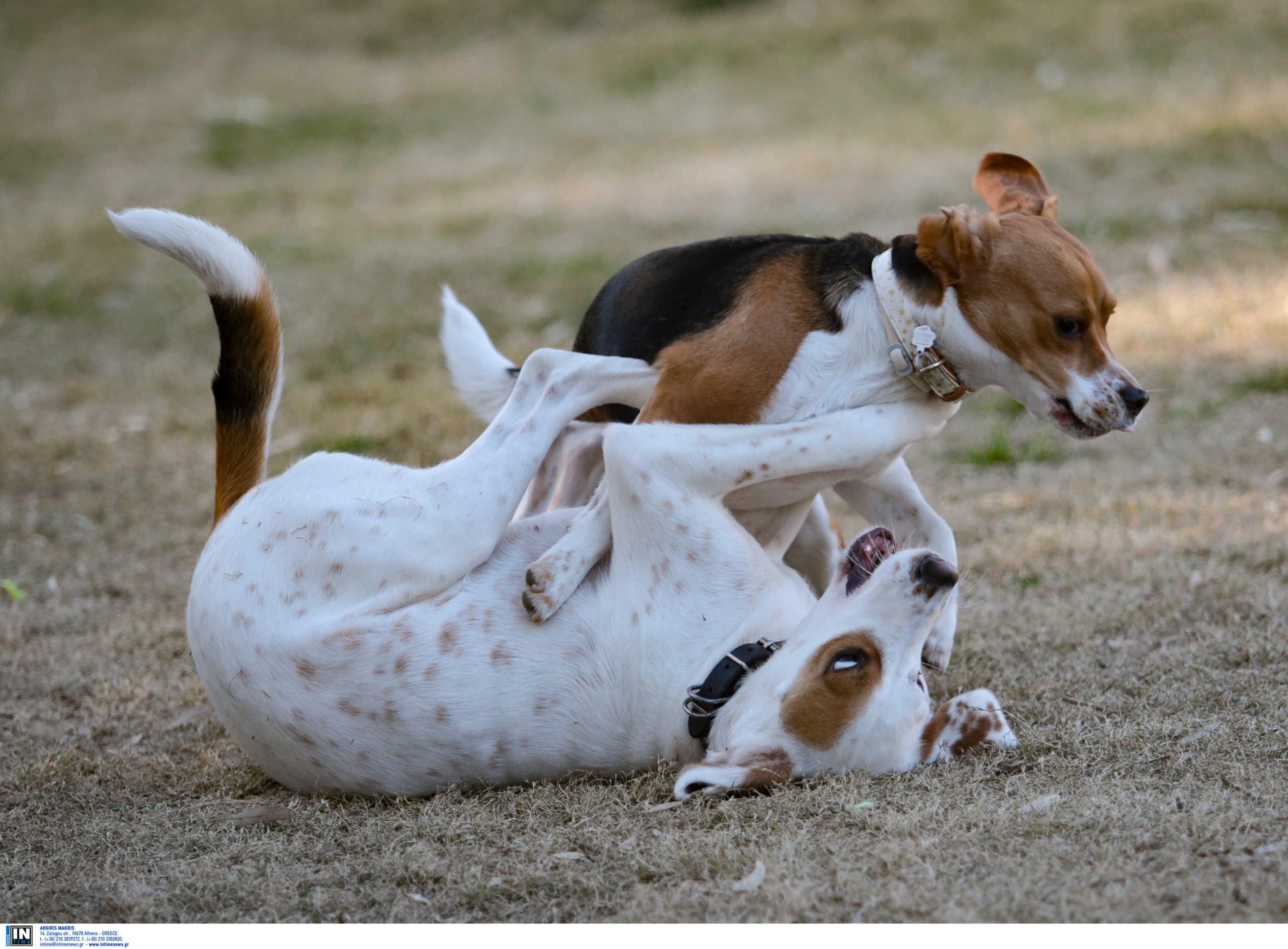 Μπαράζ δηλητηριάσεων σκύλων στην Έδεσσα – Φόλες σε πάρκο που παίζουν δεκάδες παιδιά