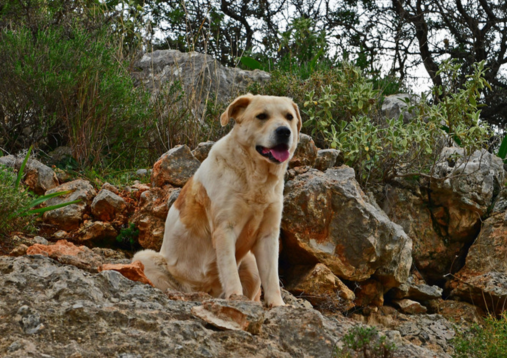 Φθιώτιδα: Έσωσαν αδέσποτο σκύλο που υπέφερε! Δεν έμειναν απαθείς από την εικόνα που αντίκρισαν