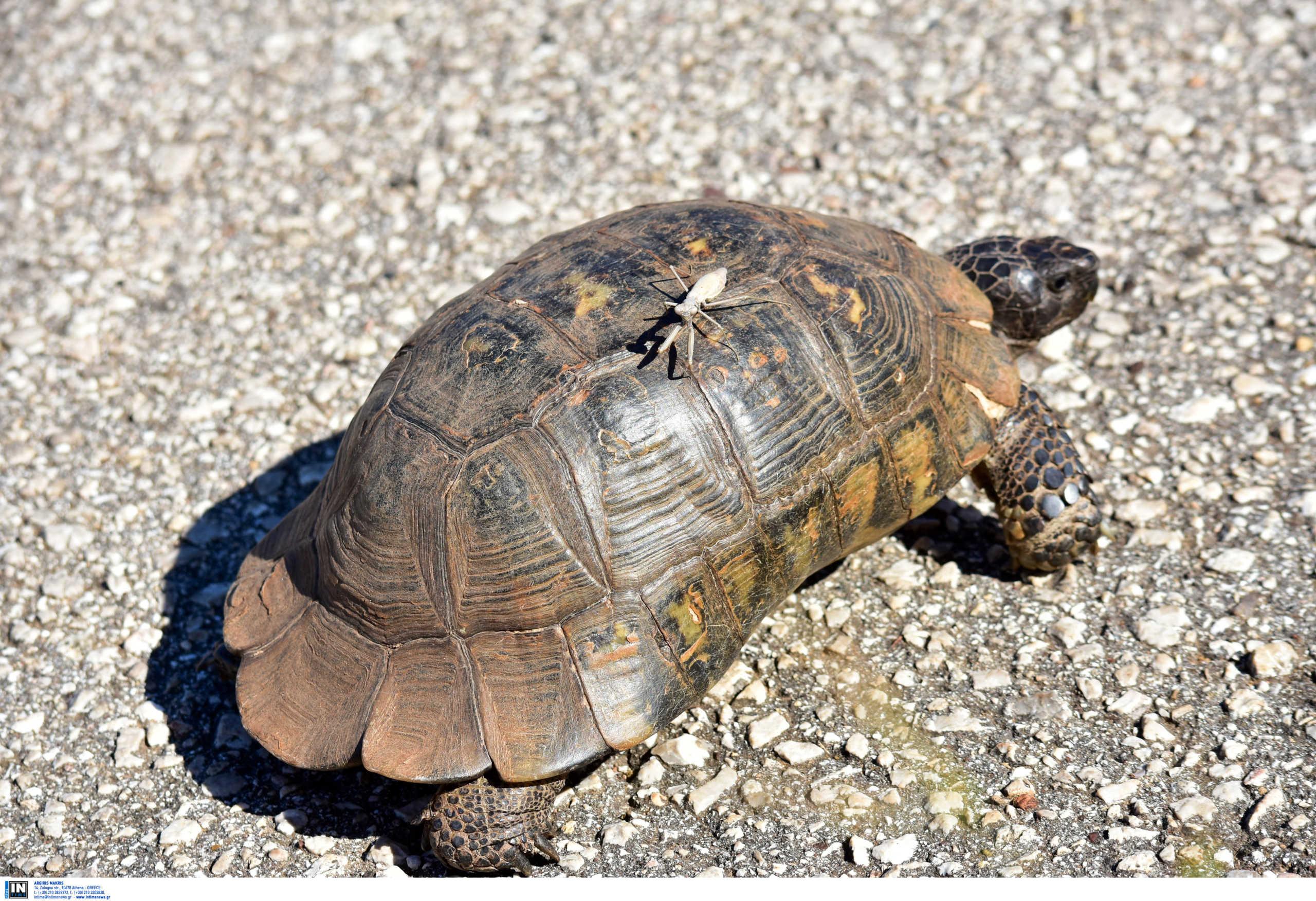 Θεσσαλονίκη: Η θάλασσα ξέβρασε μια νεκρή χελώνα καρέτα – καρέτα!
