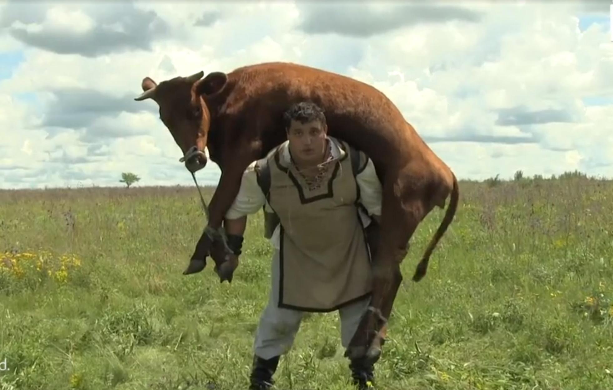Ρώσος σηκώνει στους ώμους αγελάδα 350 κιλών για περισσότερο από 1 λεπτό!