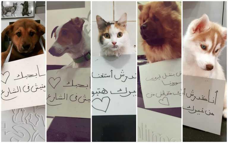 «Μην μας εγκαταλείπετε, δεν μεταδίδουμε τον κορονοϊό»... λένε οι σκύλοι και οι γάτες στο Κάιρο