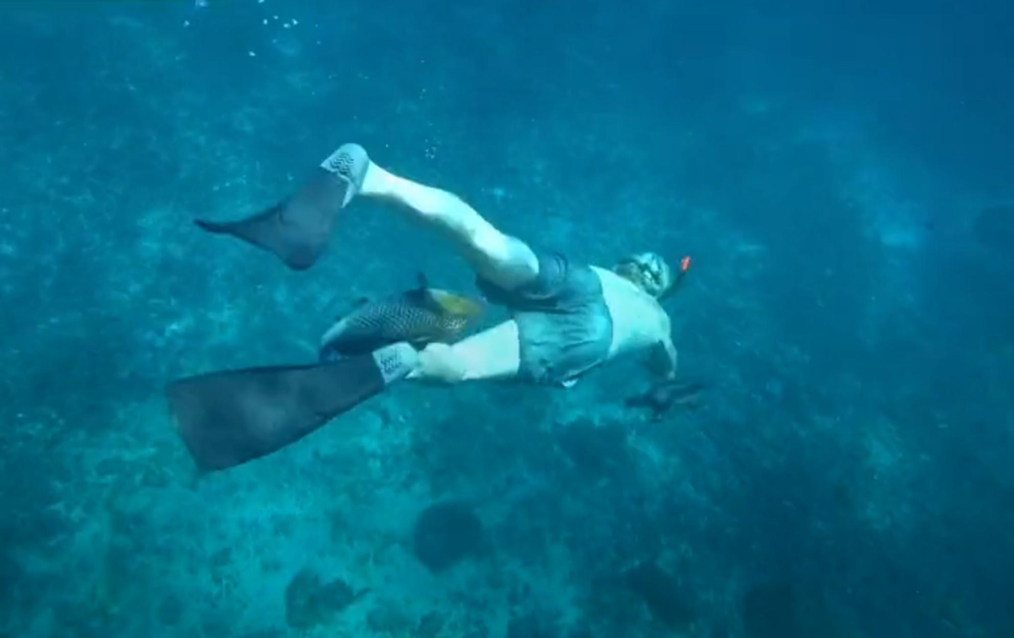 Εξαγριωμένο ψάρι επιτίθεται σε δύτες! «Φύγετε απ' τα νερά μου…»