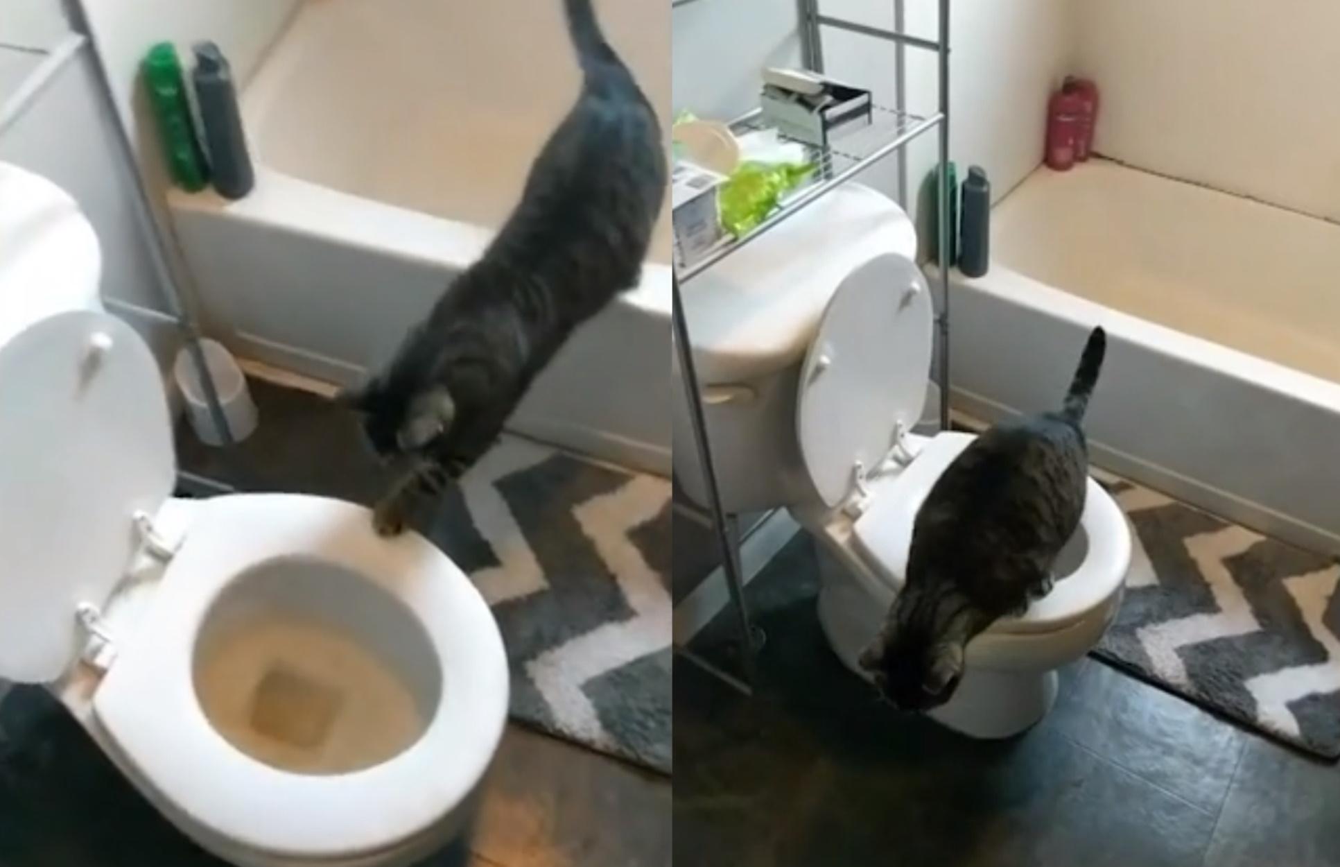Γάτα χρησιμοποιεί άριστα τουαλέτα για να κάνει την ανάγκη της!