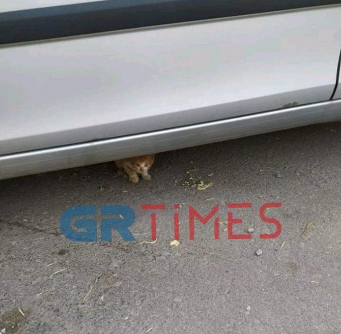 Θεσσαλονίκη: Το συγκινητικό μήνυμα για ένα μικρό γατάκι! Τι είχε συμβεί στο σημείο (Φωτό)