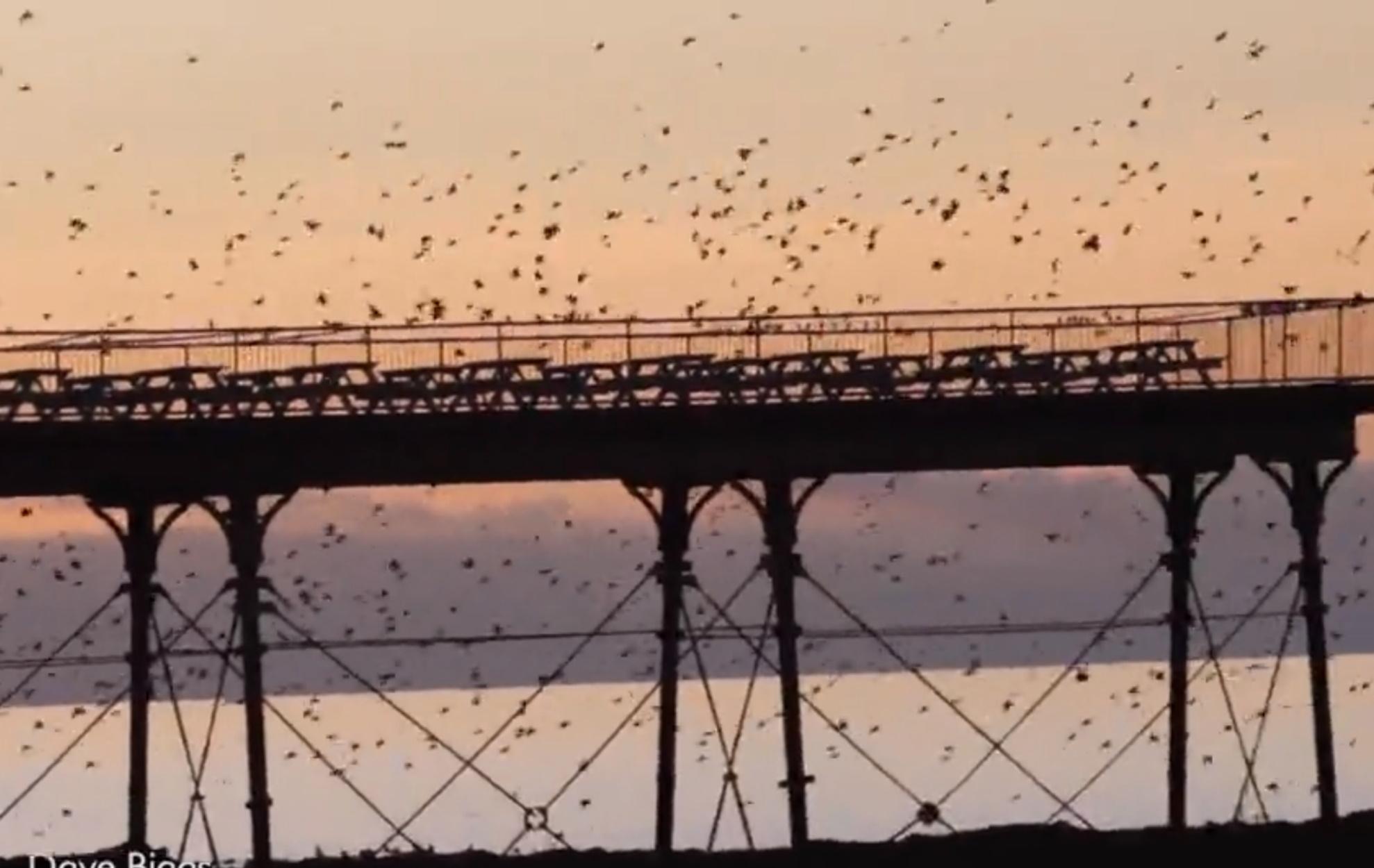 Σμήνος πουλιών… ζωγραφίζει τον ουρανό της Ουαλίας!