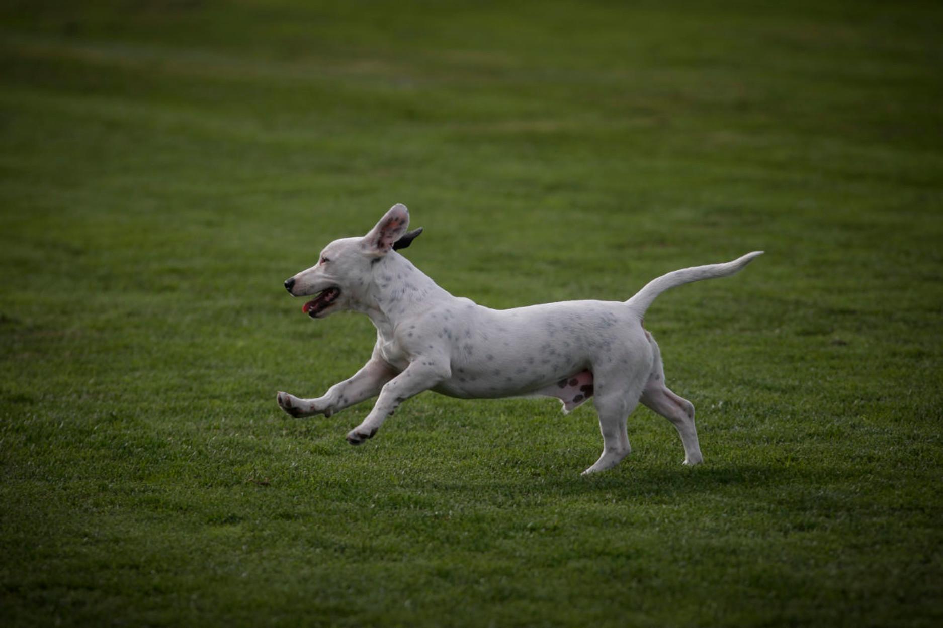 Η καραντίνα έφερε… αύξηση της ζήτησης σκύλων!