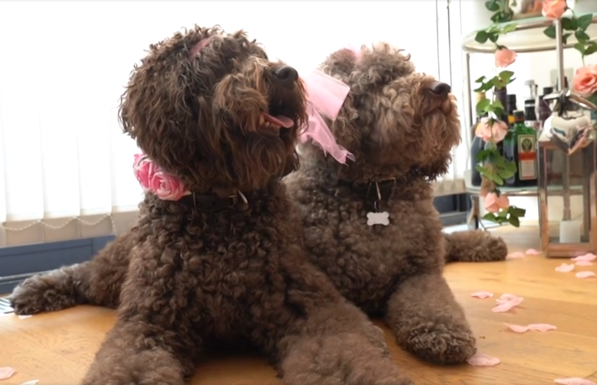 Πάρτι σκύλων οργανωμένα μέχρι… κεραίας!