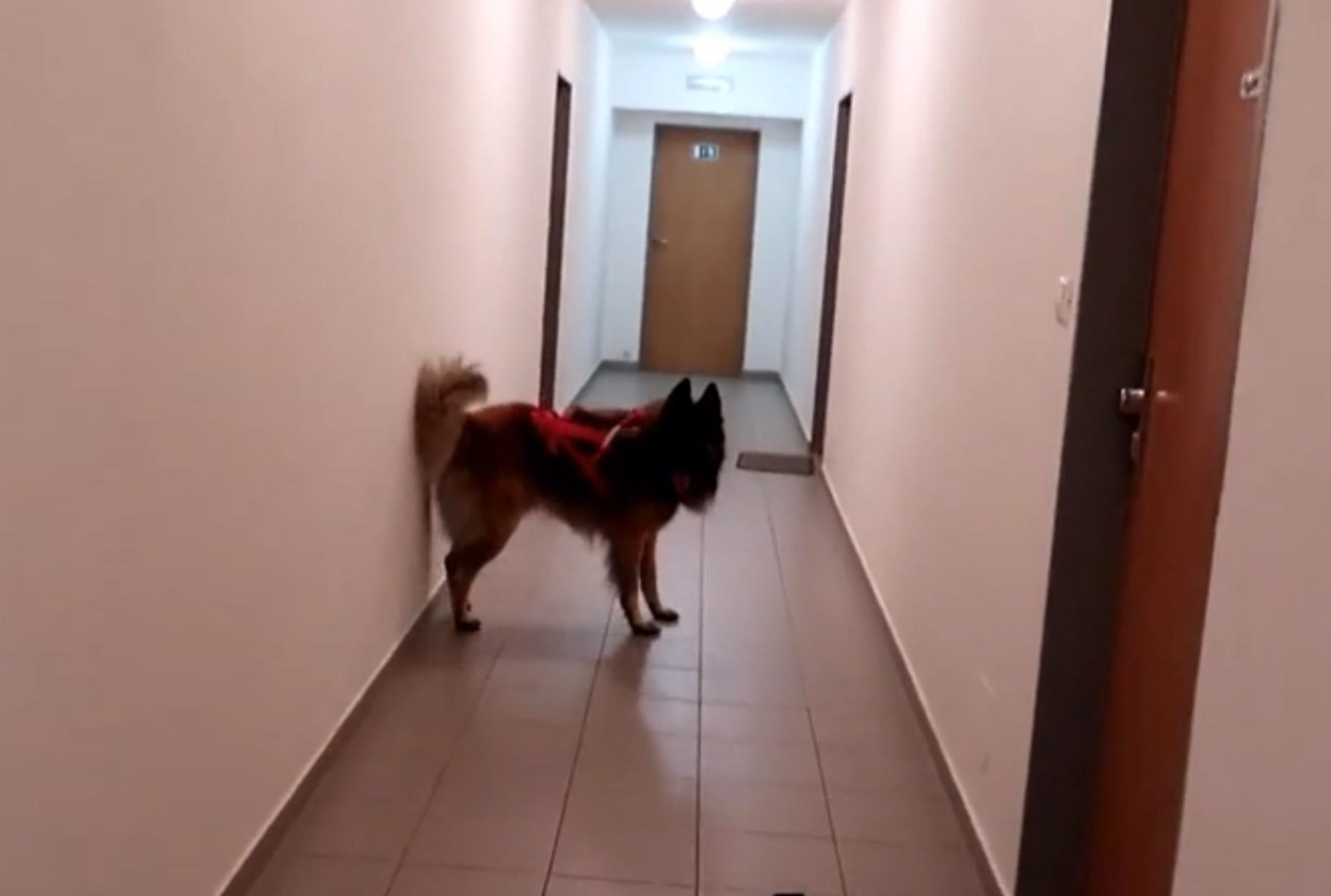Σκύλος ξετρελαίνεται να κάνει βόλτα με την ιδιοκτήτριά του!