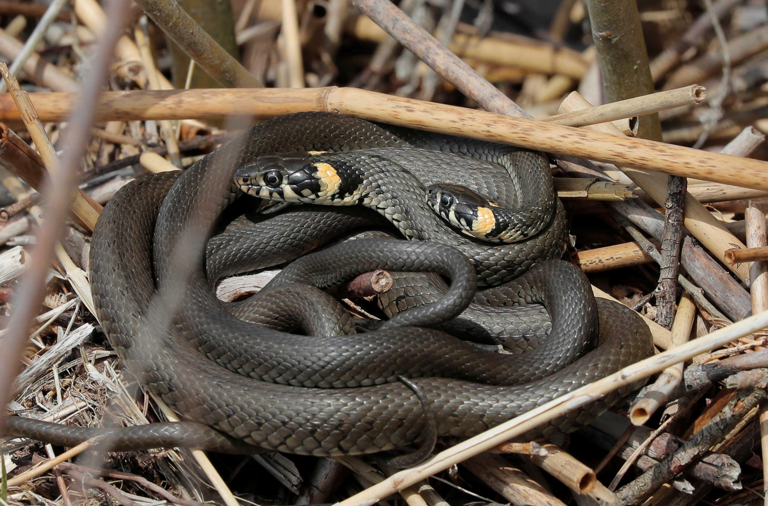 Μελέτη: Οι άνθρωποι θα μπορούσαν να γίνουν κυριολεκτικά δηλητηριώδεις όπως… τα φίδια