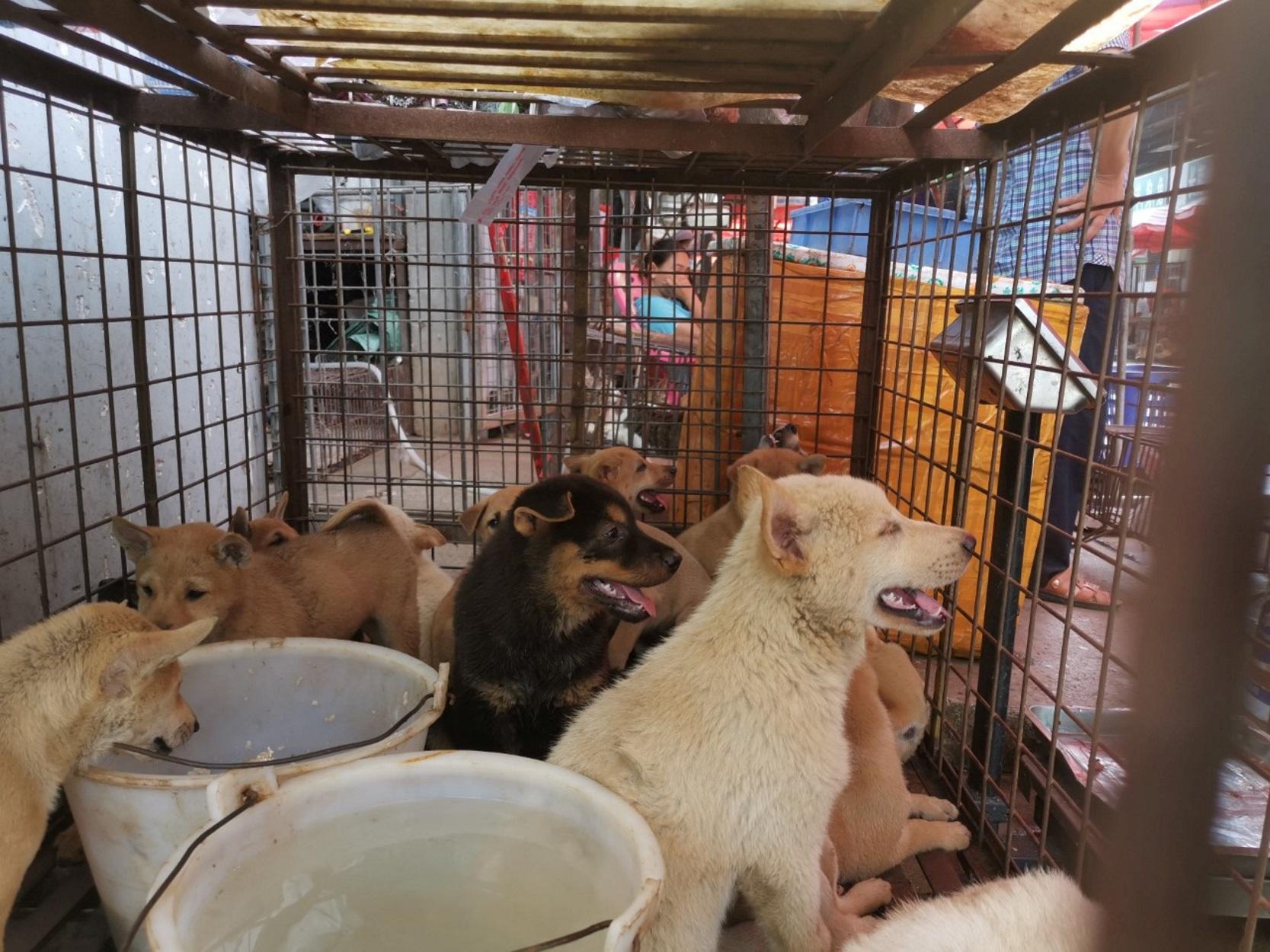 Κίνα: Ξεκίνησε το ετήσιο φεστιβάλ κατανάλωσης… σκύλων! (pic, video)