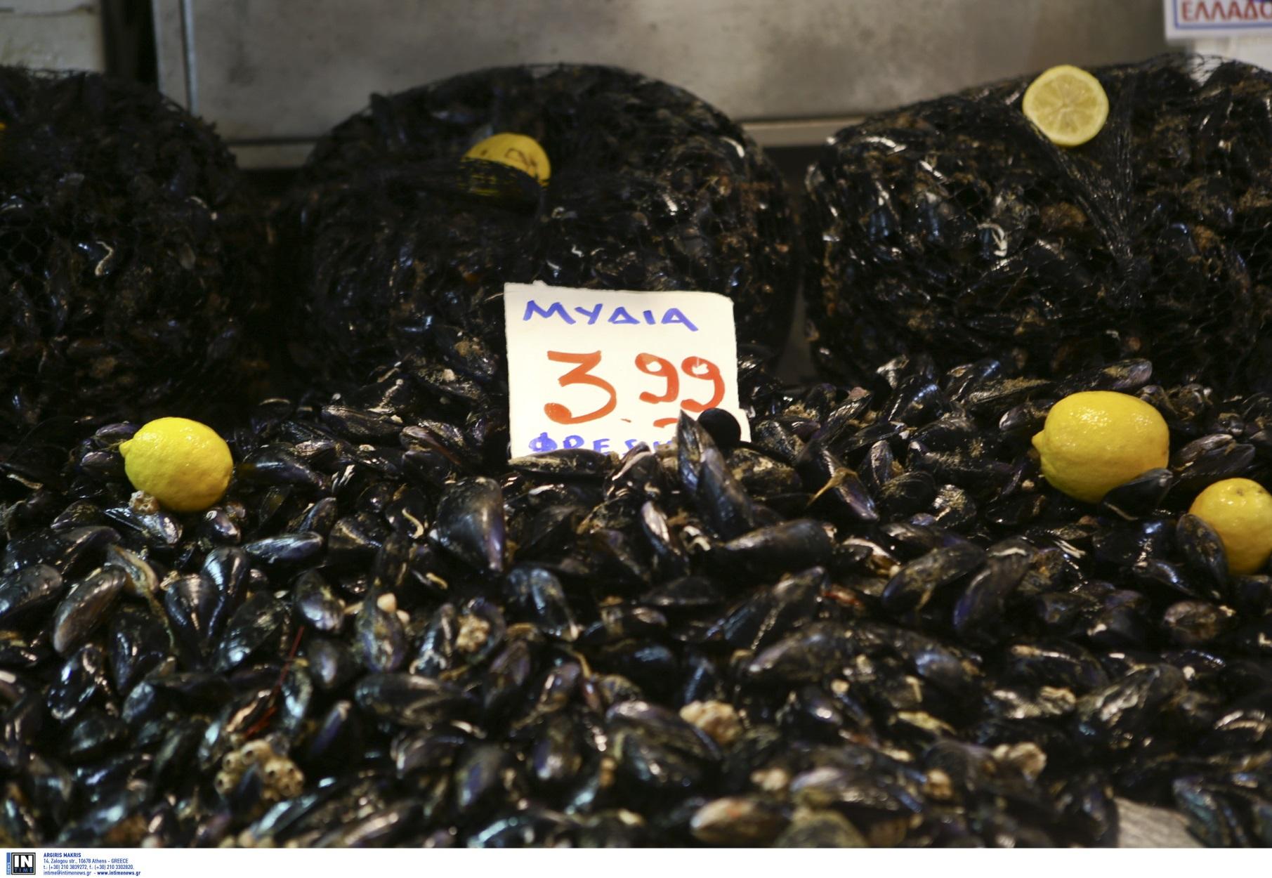 Θερμαϊκός: Στο βυθό αντί για το πιάτο Ευρωπαίων καταναλωτών… εκατομμύρια μύδια