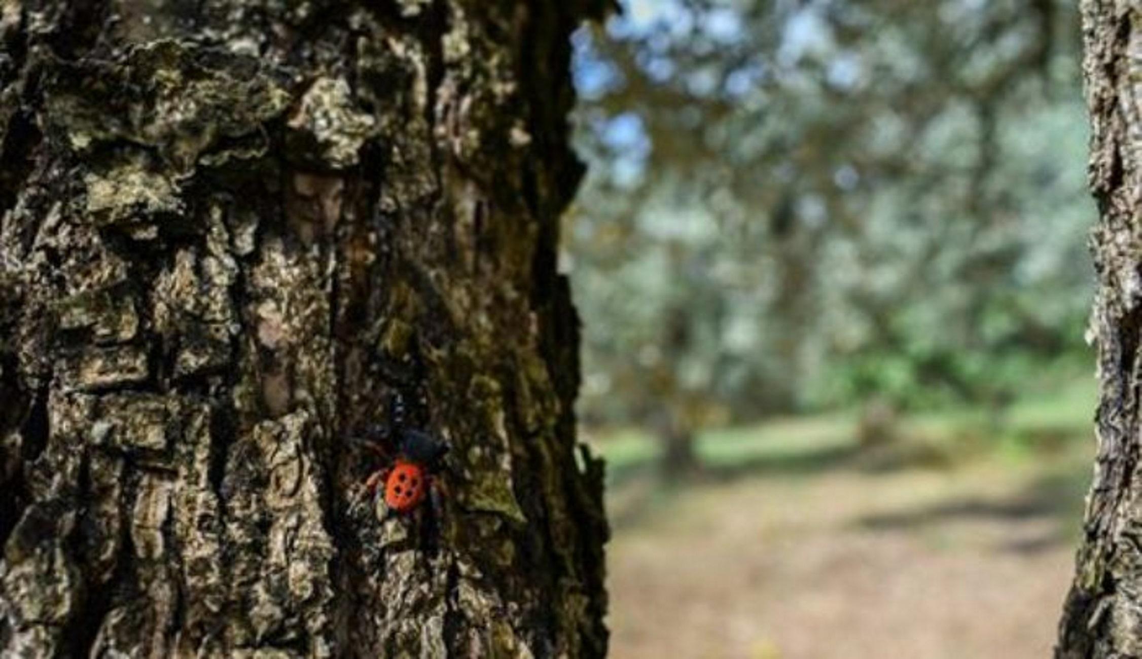 Αιτωλοακαρνανία: Πλησίασε τον κορμό του δέντρου και είδε αυτές τις εικόνες! Η έκπληξη και ο ενθουσιασμός (Φωτό)
