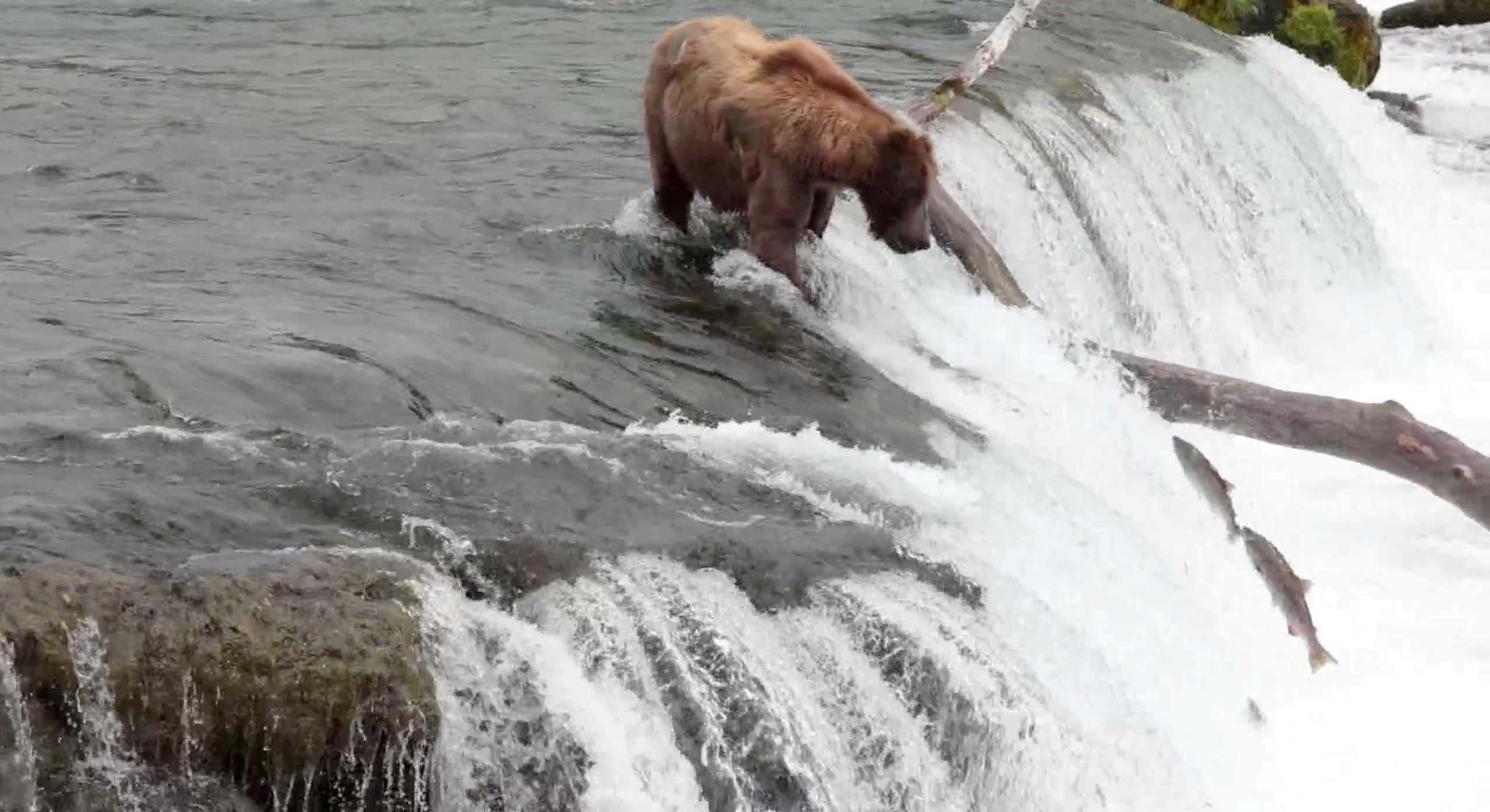 Τίποτα όρθιο! Ο Τραμπ επιτρέπει το κυνήγι μωρών αρκούδων και λύκων στην Αλάσκα