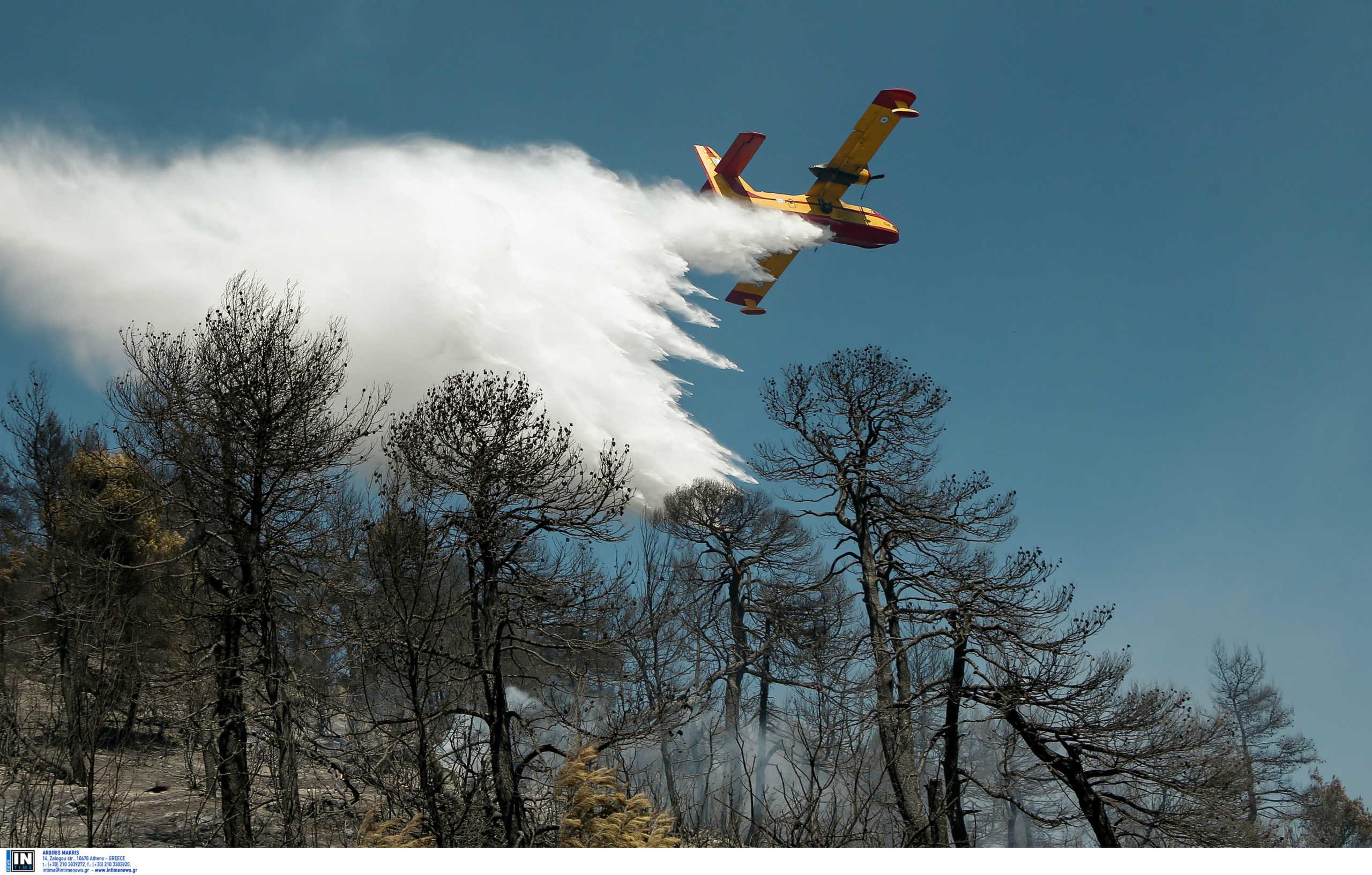Φωτιά σε δασική έκταση της Μαγνησίας