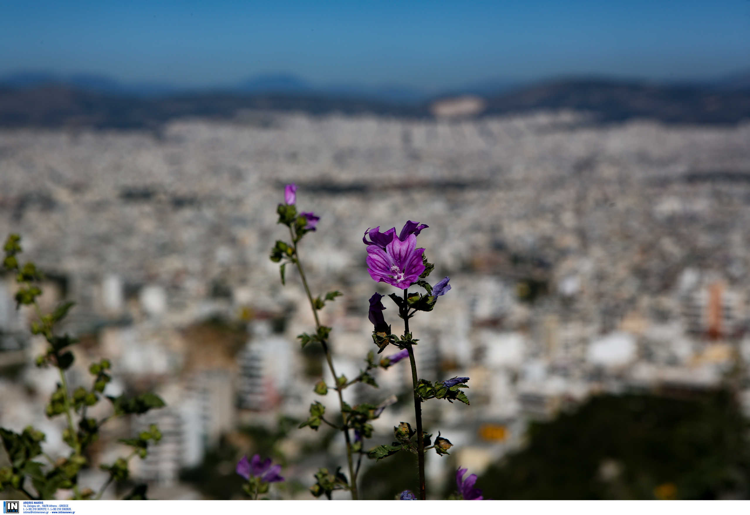 Meteo: Ζεστός ο φετινός χειμώνας στην Ελλάδα – Ποιος ήταν ο θερμότερος μήνας