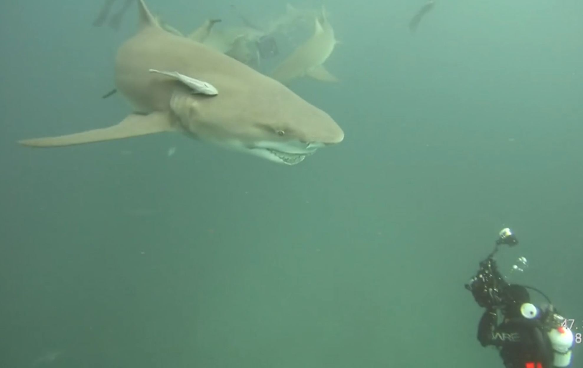 Καρχαρίες και σαλάχια μειώθηκαν κατά 71% τα τελευταία 50 χρόνια