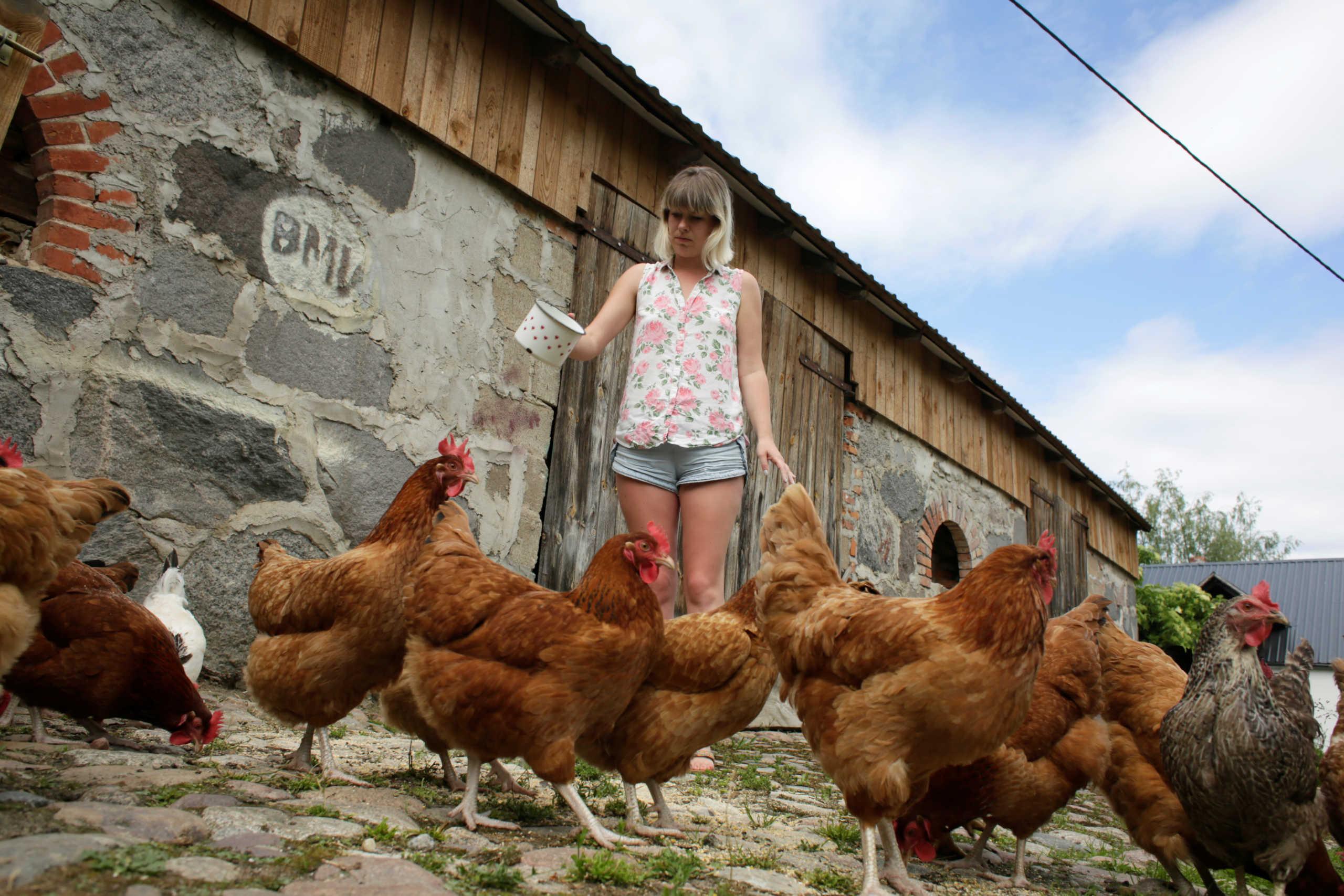 Τελικά… ποιος έκανε την κότα; Σημαντική ανακάλυψη δίνει την απάντηση