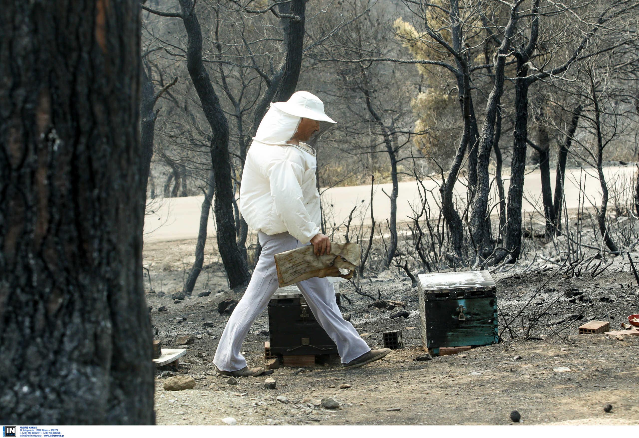 Καμπανάκι κινδύνου από 25.000 μελισσοκόμους της χώρας λόγω κορονοϊού