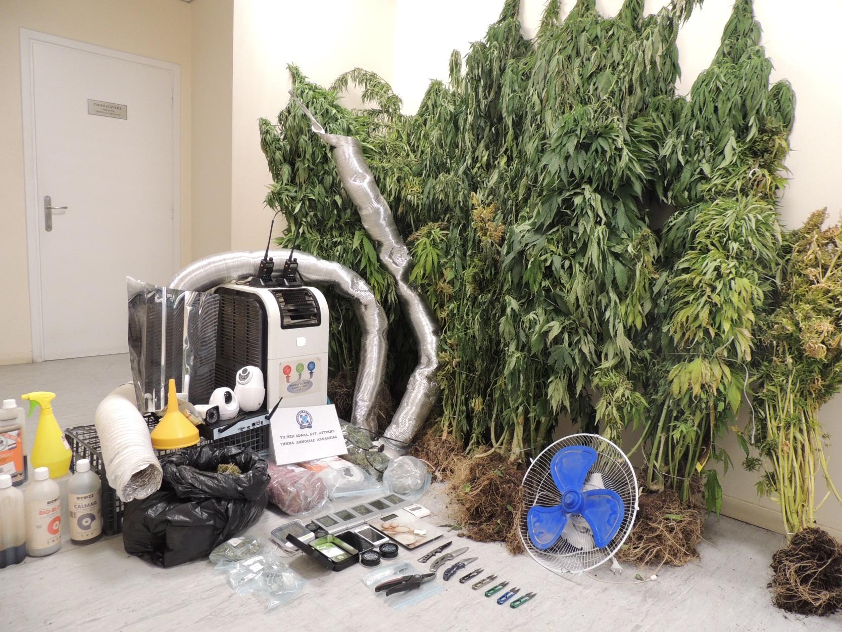 Ασπρόπυργος: Συλλήψεις για φυτεία υδροπονικής καλλιέργειας κάνναβης (pic)