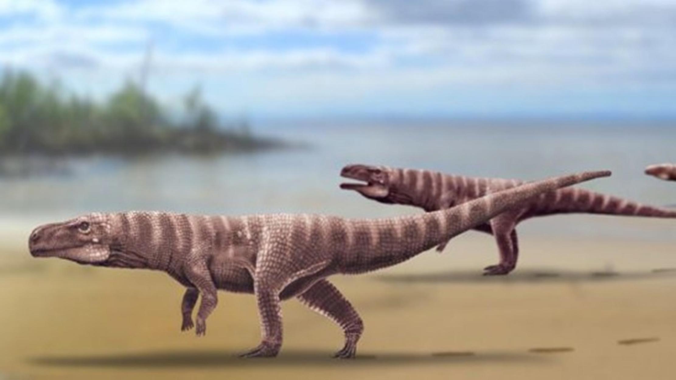 Οι κροκόδειλοι ίσως περπατούσαν στα δύο πόδια τους! Τι δείχνουν πατημασιές 115 εκατ. ετών