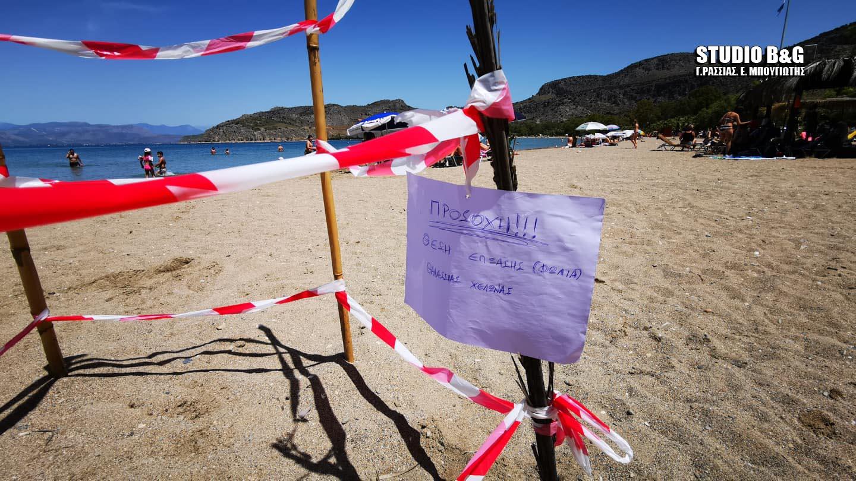 Μία χελώνα Καρέτα Καρέτα γέννησε τα αυγά της σε παραλία του Ναυπλίου! (video)