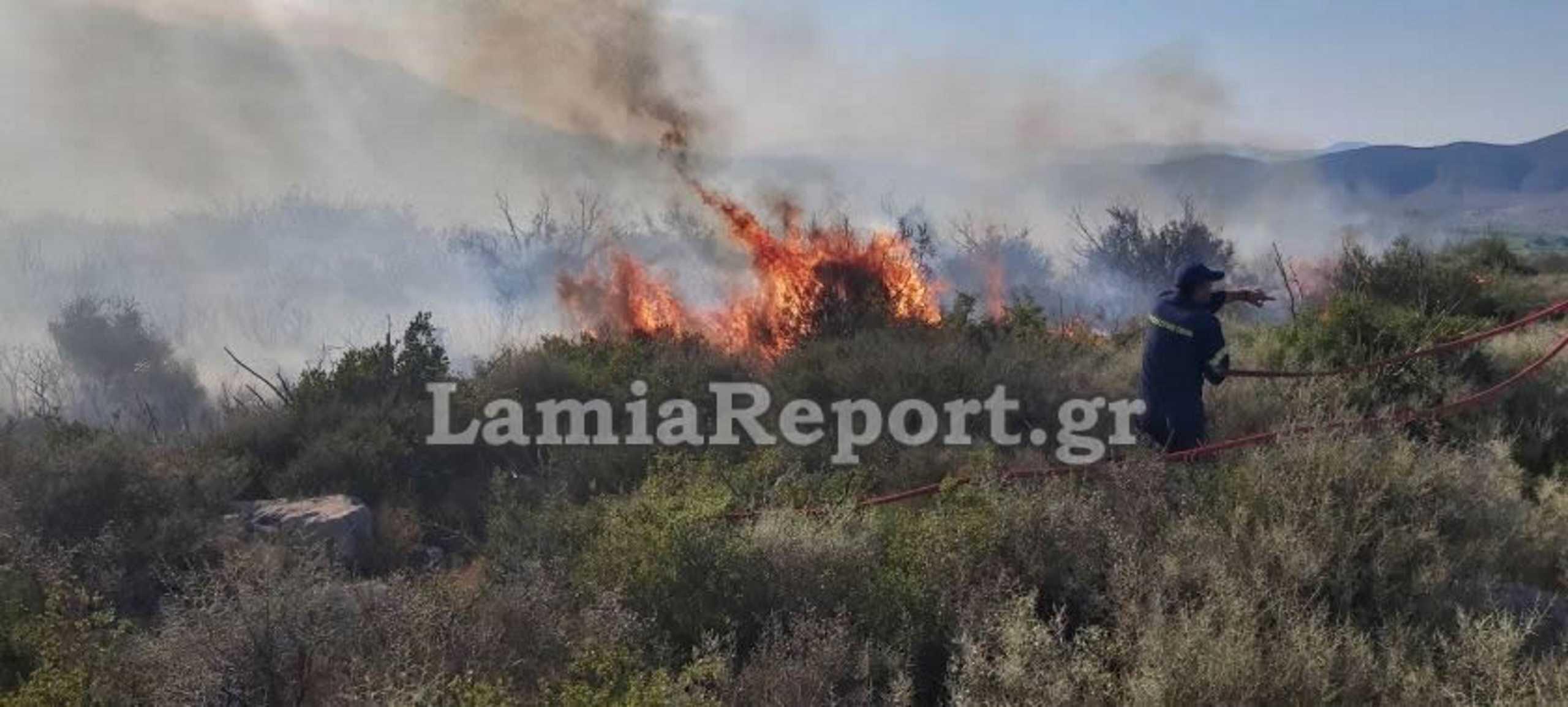 Ανεξέλεγκτη η φωτιά στη Βοιωτία (pics)