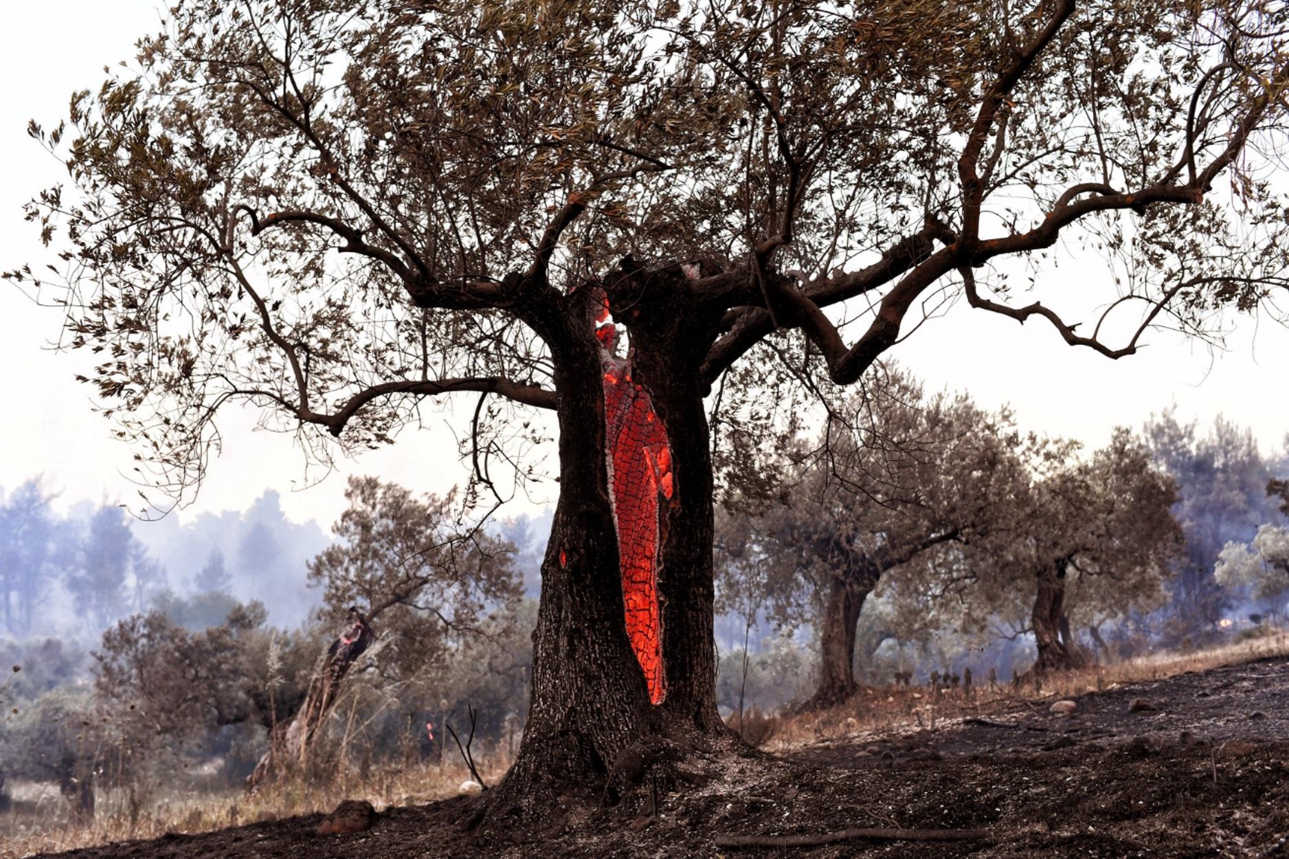 Φωτιά στον Καστό Λευκάδας: Συναγερμός στην πυροσβεστική του νησιού