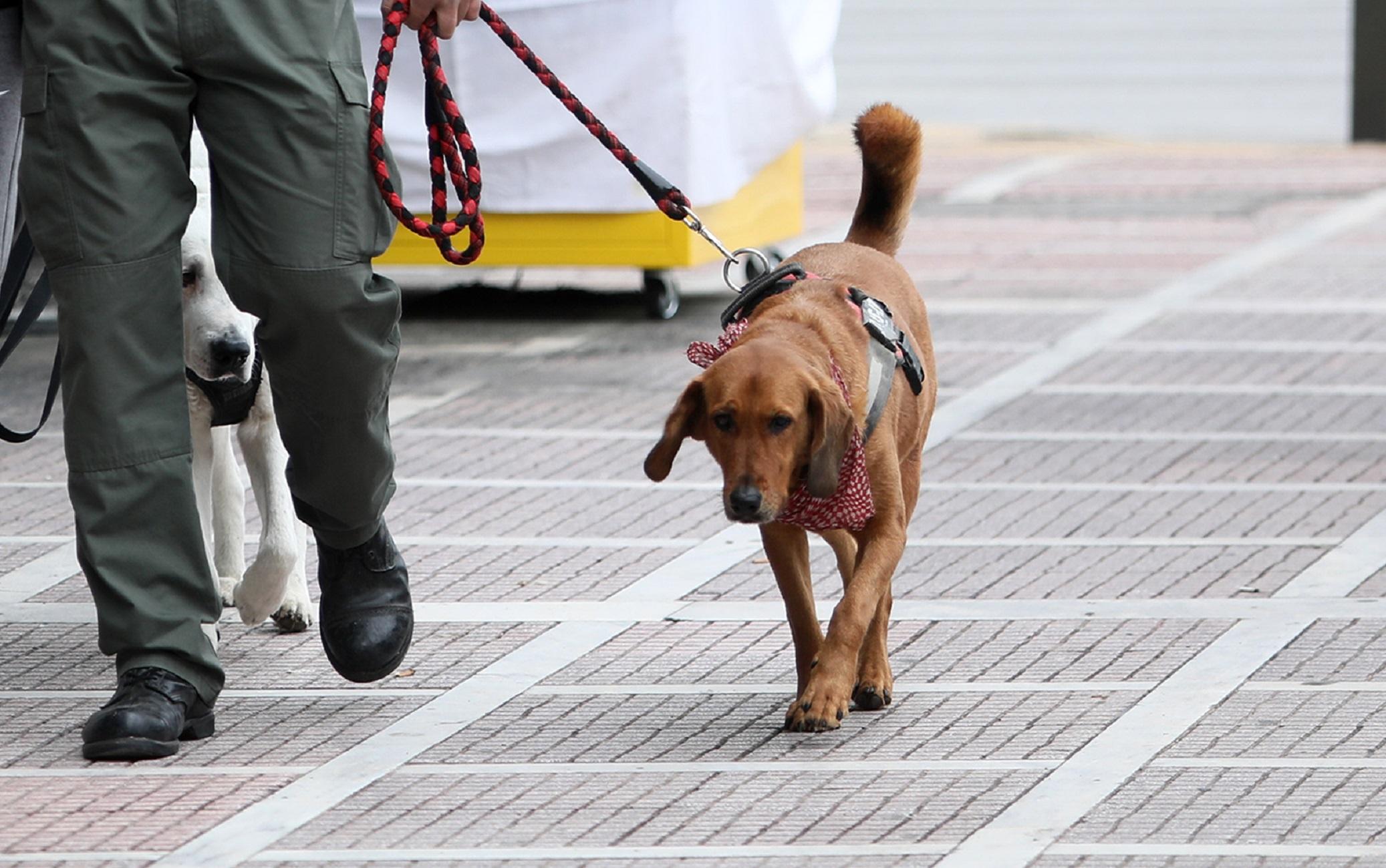 Θεσσαλονίκη: Μαχαίρωσε περαστικό που του ζήτησε να μην κακομεταχειρίζεται το σκυλί του – «Έφαγε» 9,5 χρόνια