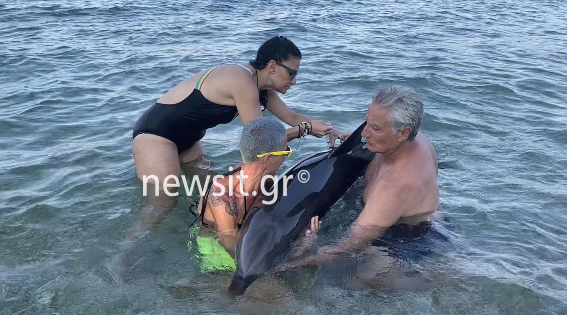 Δελφινάκι χάθηκε στην Αλόννησο και ζήτησε βοήθεια από τους ανθρώπους (video)