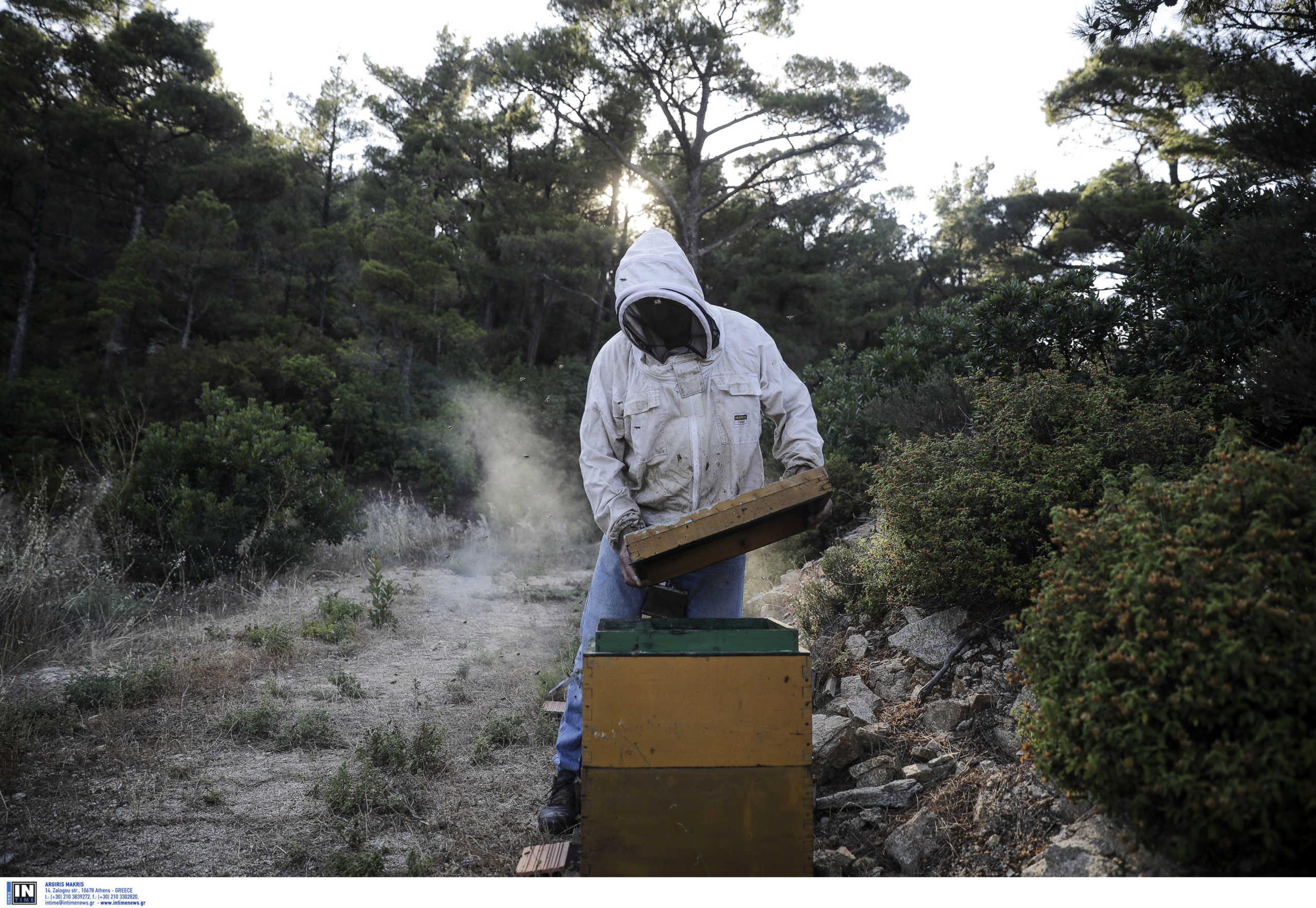 Τεράστιο πλήγμα έχει δεχτεί η ελληνική μελισσοκομία – Απογοητευτική η χρονιά