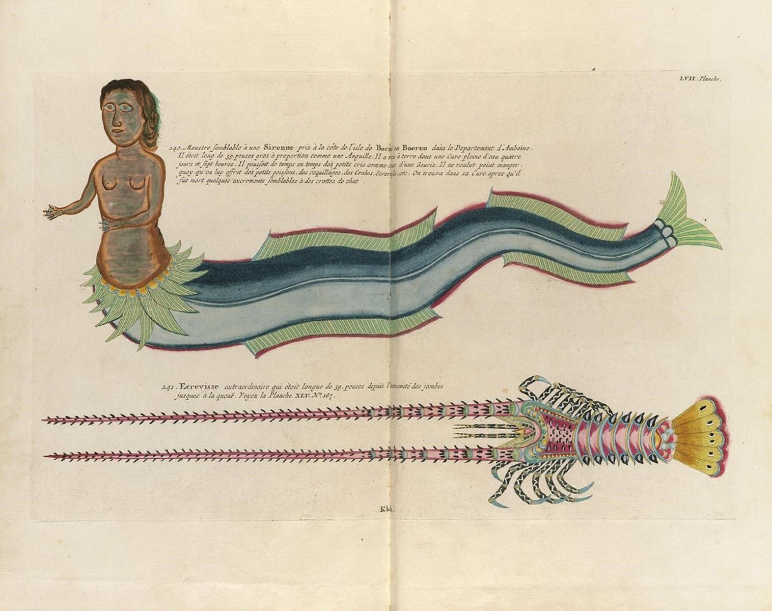 Online οι πρώτες έγχρωμες φωτογραφίες θαλάσσιας ζωής από τον 18ο αιώνας