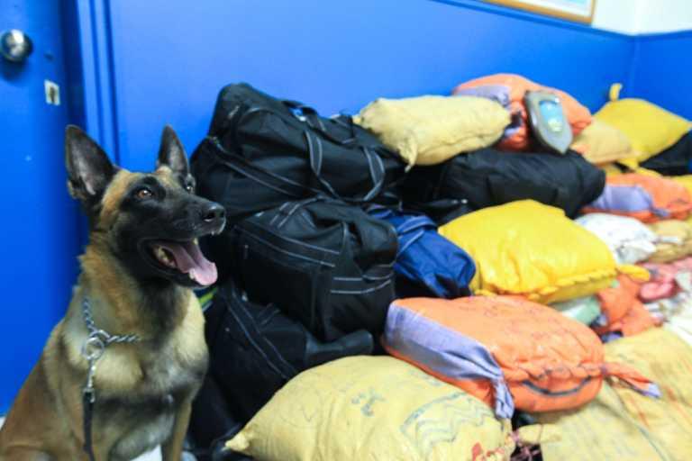 Ο σκύλος της Αστυνομίας βρήκε 47 κιλά κάνναβης στο Κιλκίς