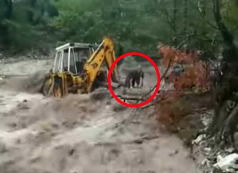 Απίστευτη εικόνα! Ανθρωπος κρατιέται από κορμό δέντρου για να γλιτώσει από ορμητικό χείμαρρο στα Τρίκαλα (video)