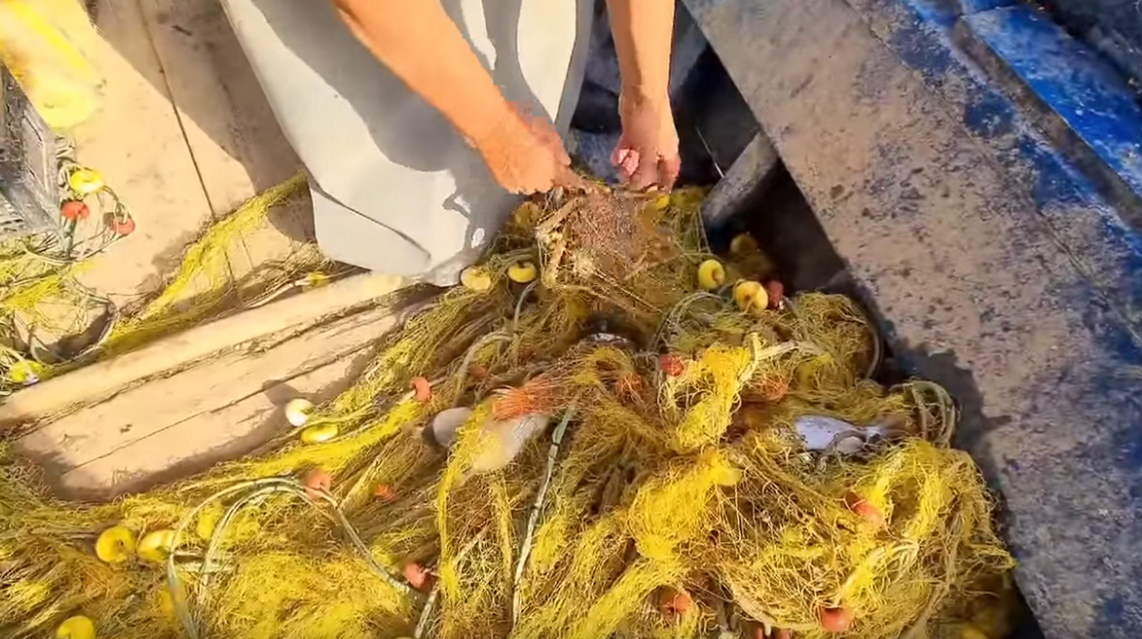 Κρήτη: Κοίταξε τα δίχτυα και κατάλαβε αμέσως ότι άξιζε ο κόπος στη θάλασσα (Βίντεο)