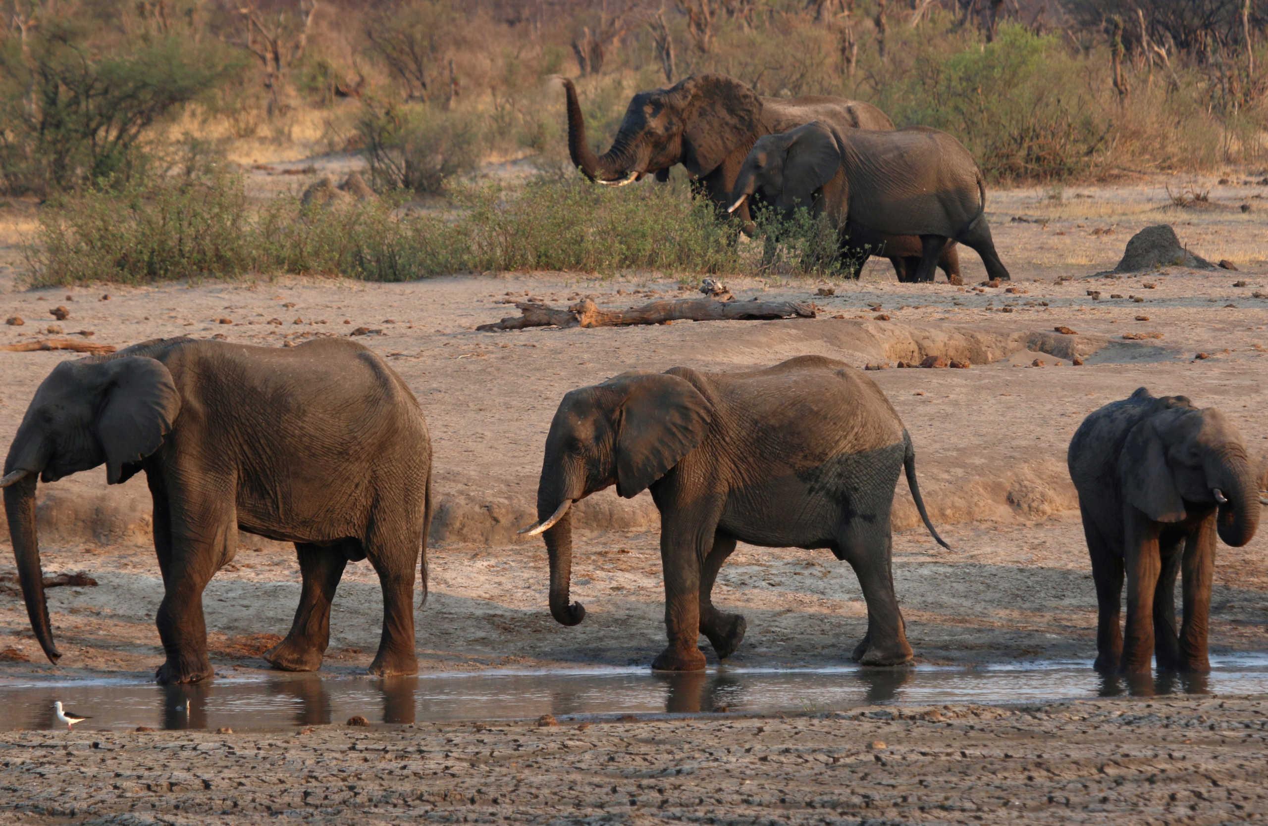 Η φύση καταρρέει! 68% μείωση πληθυσμών άγριας ζωής από το 1970