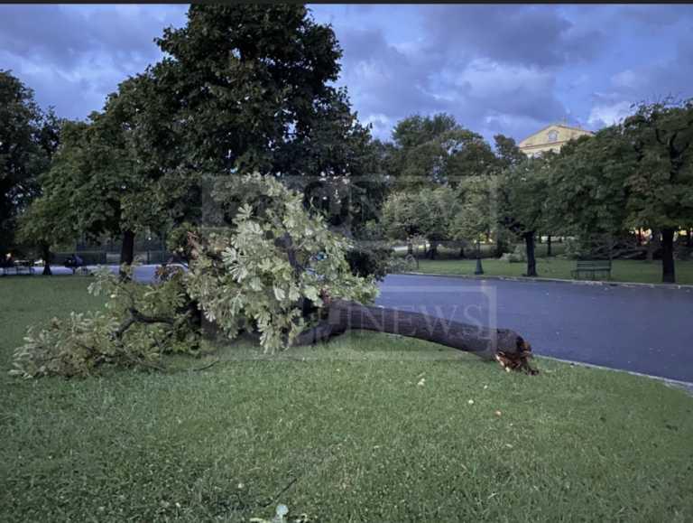 Δύσκολη νύχτα πέρασε η Κέρκυρα από την κακοκαιρία - Ξεριζώθηκαν δέντρα