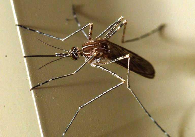"""Θα """"γεμίσουμε"""" έντομα, αράχνες και πτηνά! """"Εισβάλουν"""" 2.500 νέα είδη"""