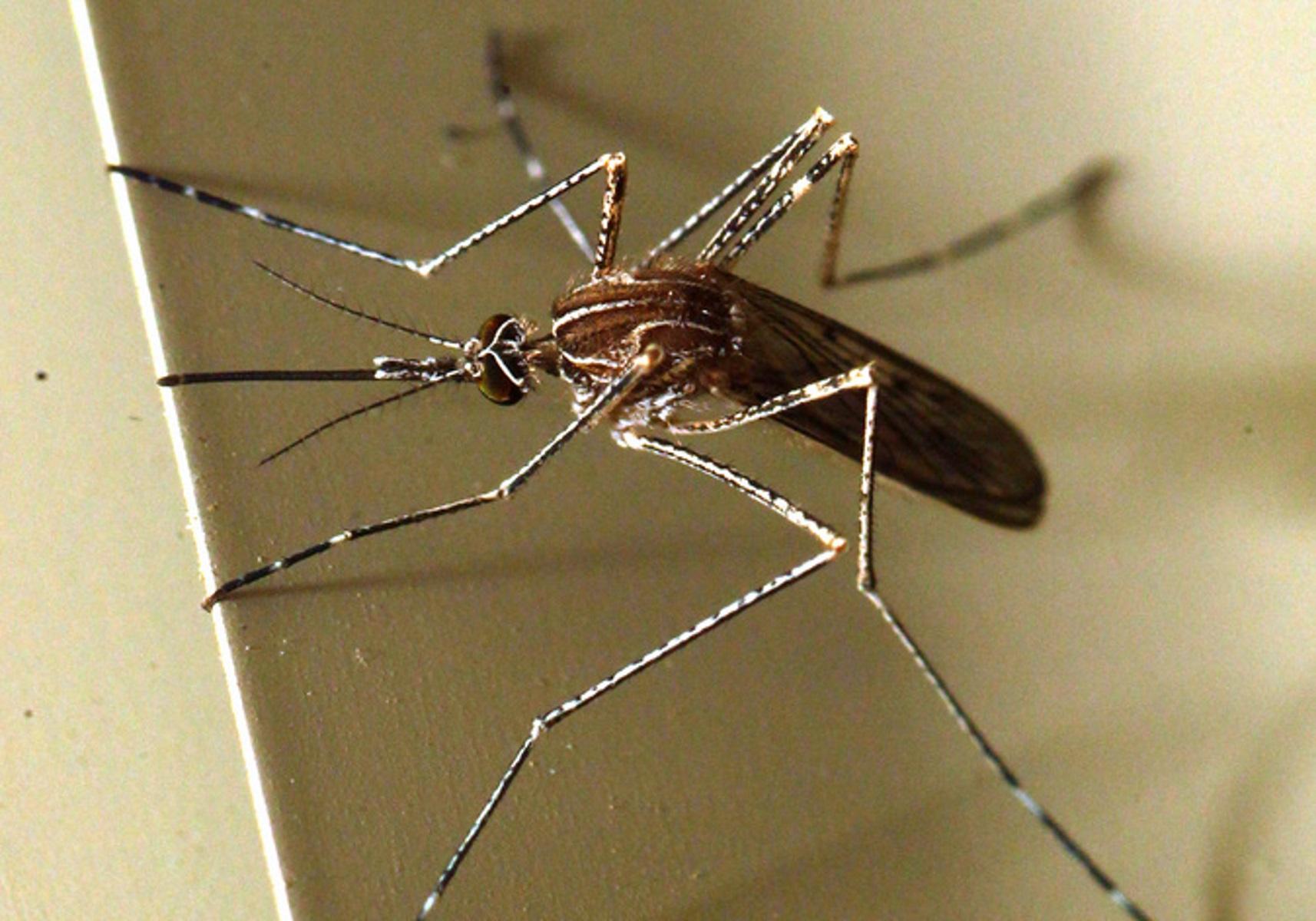 Θεσσαλονίκη: Ψεκασμοί από αέρος για τα κουνούπια – Τα μέτρα για το φετινό καλοκαίρι
