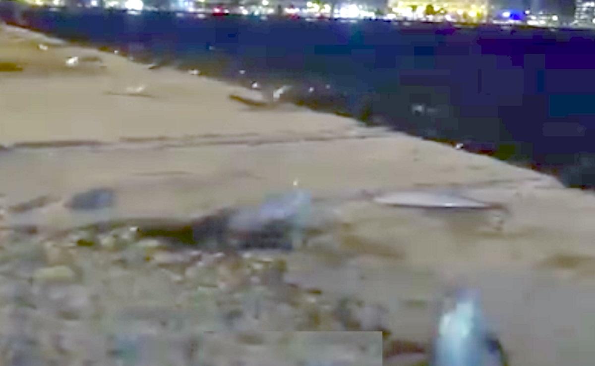 """Γι' αυτό τα ψάρια """"αυτοκτόνησαν"""" στη στεριά στη Θεσσαλονίκη! Η επιστημονική εξήγηση"""